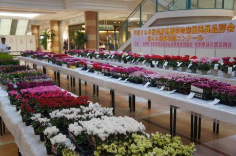 令和元年度 長野県園芸特産振興展(鉢花類コンクール)